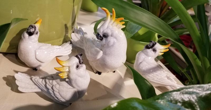 cockatoos-